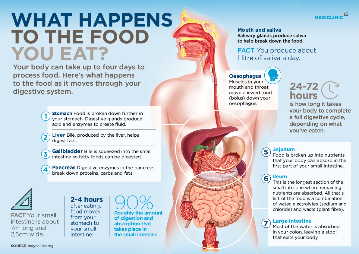 Infohub infographic_Digestion