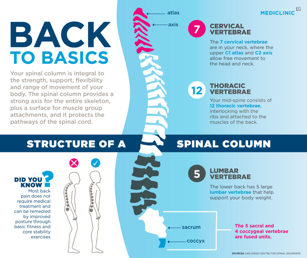Spinal column infographic
